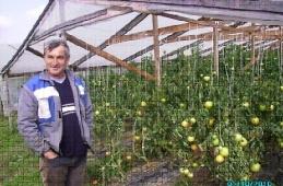 Radivoje Stanković